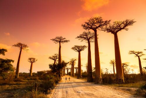 Madagascar Medical Relief & Dental Relief